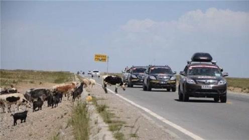 去西藏自驾游时,这几样东西尽量不要携带,导游:否则后果很严重