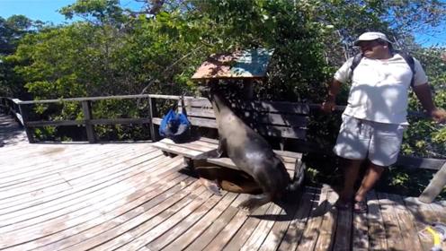 游客坐得好好的,突然被一个大屁股给挤走,海豹:这躺椅我承包了