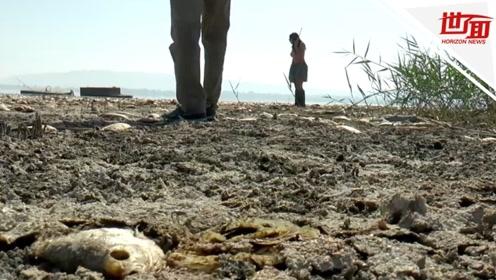 希腊湖泊水位连年下降 大量鱼类横尸湖畔