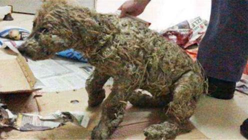 """男子在泥潭中救出一只""""小狗"""",洗干净后脸色大变:这不是狗"""
