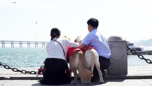 """10年后再相遇,盲人男女喜结连理,全靠各自的导盲犬当""""红娘"""""""