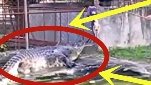 男子挑着一只鸡放在水面,瞬间水面沸腾,3秒后所有人都慌了!