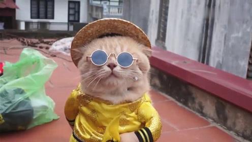一只猫咪竟因街头卖鱼走红,巡视菜市场当老大简直太萌了