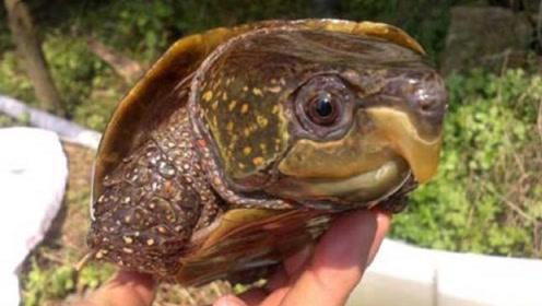"""男子在河边捡到一只""""巨头龟"""",得知真实身份后,吓得赶紧报警"""