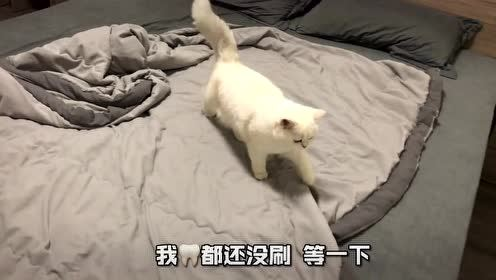 为什么说没有男朋友就养只猫吧!