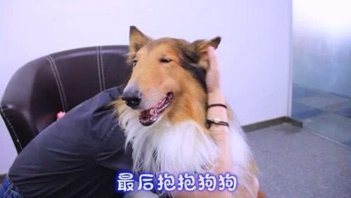 撸狗小诀窍,让你家狗子舒服的起飞!