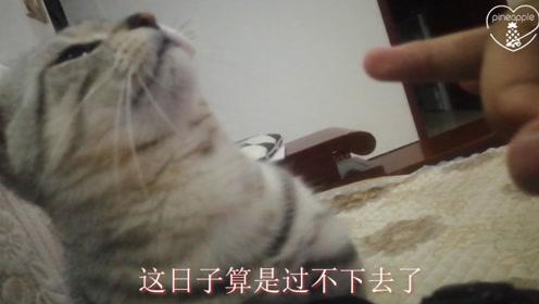 小猫调皮被主人弹脑瓜崩,它的表情笑喷了,猫:这日子过不下去了