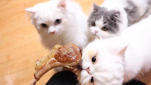 刚煎好的羊排,滋滋冒油,馋猫们跃跃欲试
