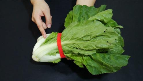 用清水洗蔬菜等于白洗,用这一招洗得干净无残留,学会受益一生
