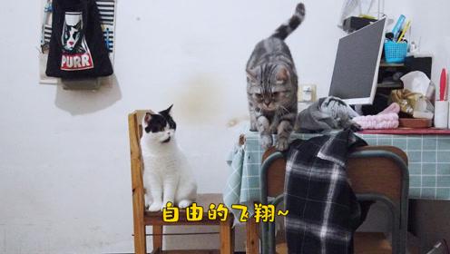 两人两猫一世界,下班之后,什么烦心事都是浮云,开心养猫撸猫
