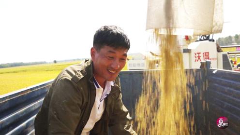 """""""龙江第一镰""""!他让全国人民提早半个月吃上黑龙江的鲜米"""