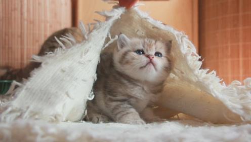 腿脚不利索的小奶猫,摇摇晃晃地探索外面的世界