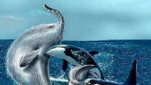 这种鱼叫飞毛鱼,因为看错误认为它和鲸沙鱼打过架!