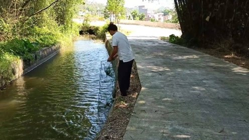 农村小伙用月饼做诱饵,在河里下地笼,看看收获到什么野货?