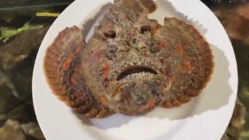 """世界上最毒的""""石头鱼""""有多可怕?老外作死实验,看完心惊胆战!"""