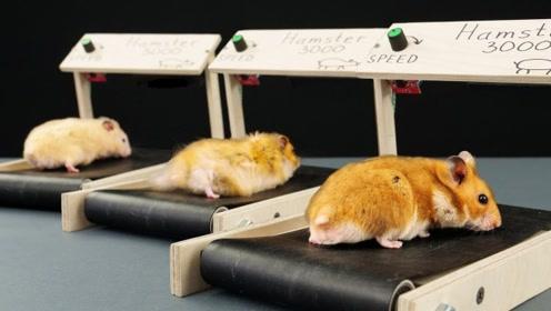 给小仓鼠DIY一个迷你跑步机,这可是要把它给累坏,被萌化了!