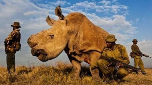 世界上最珍稀的动物,警察24小时武装保护,因无法繁殖即将灭绝