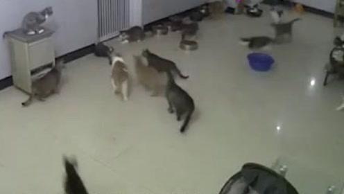 这只老鼠真是倒了八辈子霉了,钻进十几只猫咪的屋子里,内心崩溃