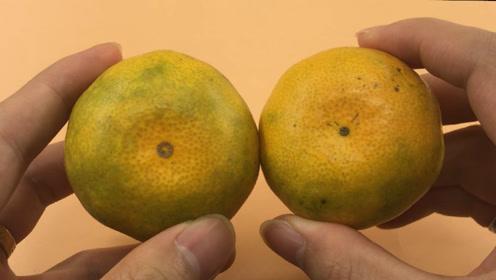 橘子甜不甜,看一眼这里就知道,一挑一个准,老果农方法太管用了