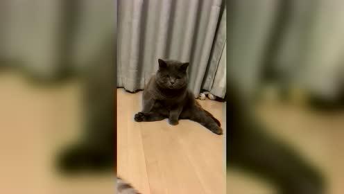 肥猫:我将赐予你无上光荣!