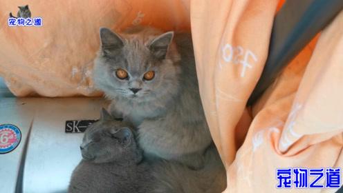 猫咪集体睡午觉,小胖猫:能给未来的王让个位不?猫咪:当上再说