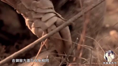 中国仅存11只,又一国宝级动物濒临灭绝,稀有程度超过大熊猫