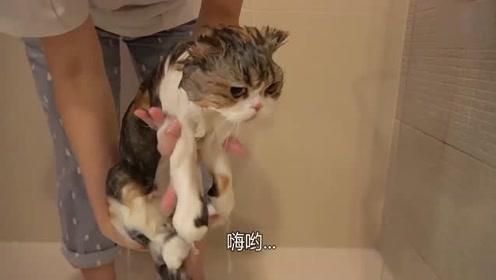 【CreamHeroes】chuchu猫洗澡了