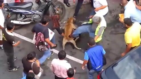 二哈被恶犬咬住脖子不松口,警察来了都不好使,场面瞬间失控