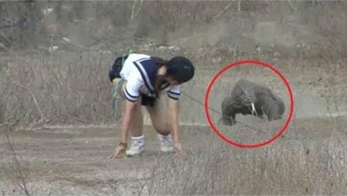 日本女子身后绑一块肉,引诱科莫多巨蜥追自己,镜头拍下全过程