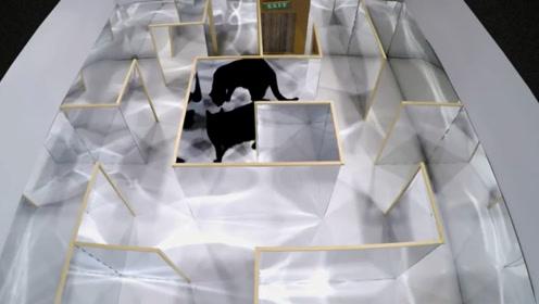 把猫咪放在镜子迷宫里会怎样?猫咪全程智商在线,淡定逃脱