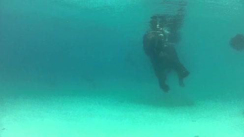 5吨重大象在海中游泳,还真就不会沉下去,这技能给满分