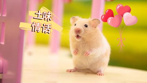 3句土味情话,仓鼠:不信撩不到你,拿去撩你喜欢的人吧!