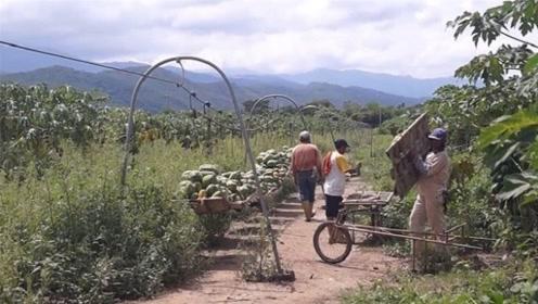 """大叔发明""""水果运输""""神器,不用油不用电,一人一次能搬运2吨"""