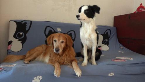 家里两只狗一只猫比较安静的片刻时光,真的是太难得了
