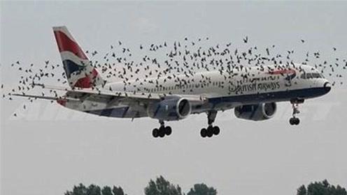 高速飞行的飞机,撞上鸟群有什么后果?