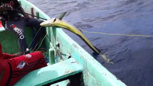 这才是老渔民,一条普通的渔船,捕到的都是大鱼