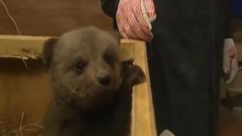 """老外捡到一只""""孤儿""""熊,带回家当亲生儿子养,网友:太可爱了!"""