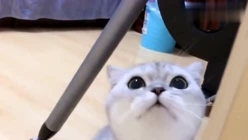 猫咪洗澡还被女主人打,气的在门口堵女主人,太逗了