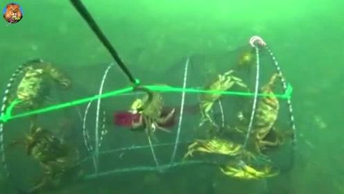 往海里仍一个地笼,抓上来十几只大螃蟹,这才是高手啊