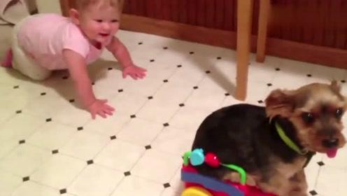 宝宝和狗狗一起玩耍,玩得好开心!