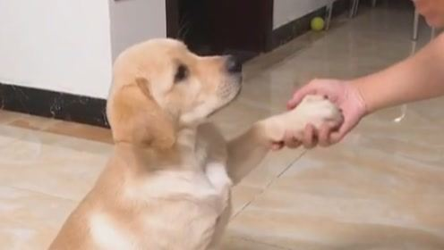 盘点脾气最好的狗狗,天生性情温顺,最后一种让人意想不到