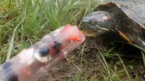 男子作死给乌龟吃冰棍,下一秒乌龟的反应亮了,网友:这是人做的事?