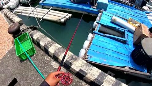 渔港前打钓鱼,竹梭鱼黑鲷鱼大眼海鲢,羡慕这种钓点