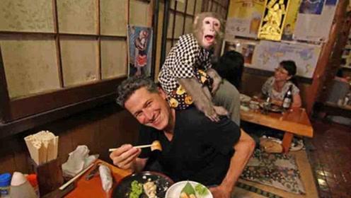 日本一家奇葩餐厅,请两只猴子当服务员,每天生意火得一塌糊涂!