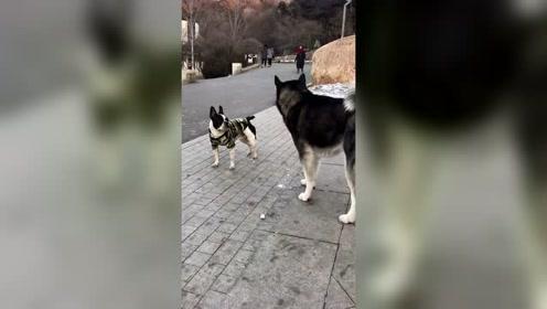狗子:这小子不按套路出牌啊,老弟,老坛味有点重啊!