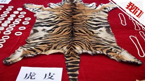 西宁破获珍稀动物制品走私案 象牙狮骨虎皮多取自幼年动物
