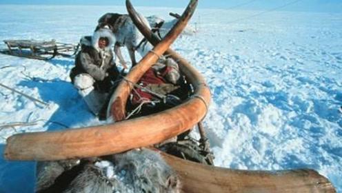 西伯利亚冻土融化,发现14300年前动物,专家:人类要当心了