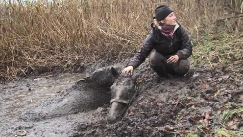 马儿不慎陷入沼泽,众人都劝主人放弃,结果主人的做法却不一样