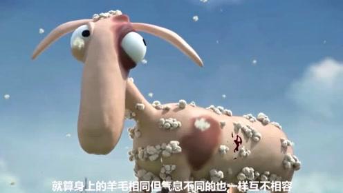 牧羊人不让羊群混在一起,想尽各种办法阻隔,没想到酿成了悲剧