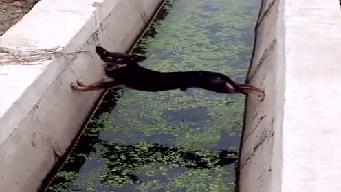 狗子:我太难了,有没有人救救我!